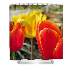 Tulip Celebration Shower Curtain by Karen Wiles