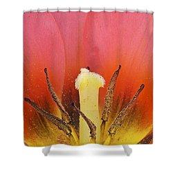 Tulip Center Shower Curtain by Michael Peychich