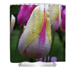 Shower Curtain featuring the photograph Tulip Close-up 2 by Manuela Constantin