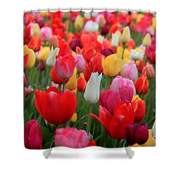Shower Curtain featuring the photograph Tulip Color Mix by Peter Simmons