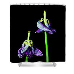 Tulip Dance Shower Curtain