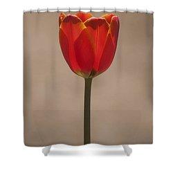 Tulip En Fuego Shower Curtain