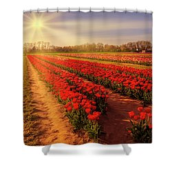 Shower Curtain featuring the photograph Tulip Farm Sunset by Susan Candelario