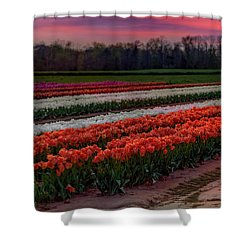 Shower Curtain featuring the photograph Tulip Farm by Susan Candelario