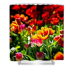 Shower Curtain featuring the photograph Tulip Flower Beauty by Alexander Senin
