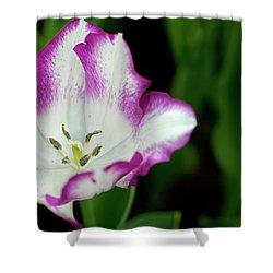 Shower Curtain featuring the photograph Tulip Flower by Pradeep Raja Prints