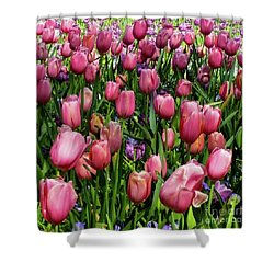 Tulip Flowers  Shower Curtain