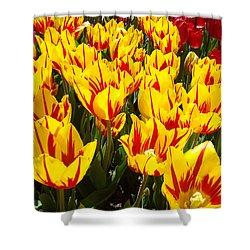 Tulip Flowers Festival Yellow Red Art Prints Tulips Shower Curtain by Baslee Troutman