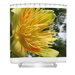Shower Curtain featuring the photograph Tulip Tree Flowers by Tina M Wenger