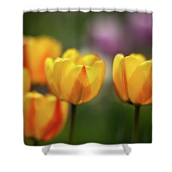 Tulip Glow Shower Curtain by Mike Reid