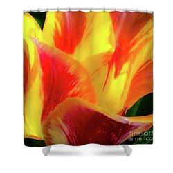 Tulip In Bloom Shower Curtain