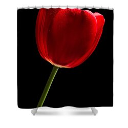 Red Tulip No. 2 By Flower Photographer David Perry Lawrence Shower Curtain