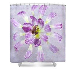 Tulip Patterns  Shower Curtain
