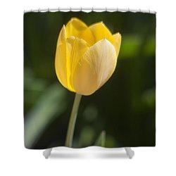 Tulip Portrait Shower Curtain