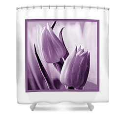 Tulip Purple Tint. Shower Curtain