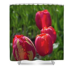 Tulip Quad Aglow Shower Curtain