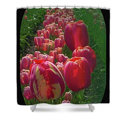 Tulip Row Shower Curtain
