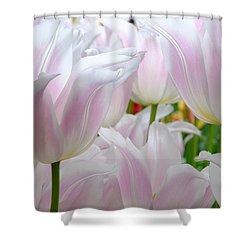 Tulip Serenity Shower Curtain