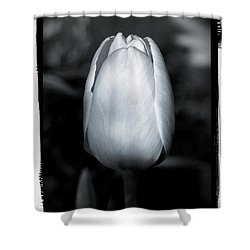 Tulip Shower Curtain by Sergey Matushevskiy
