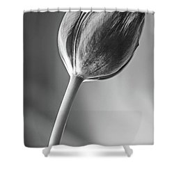 Tulip Shadow And Light Shower Curtain by Marius Sipa