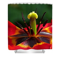 Tulip Stamen Shower Curtain
