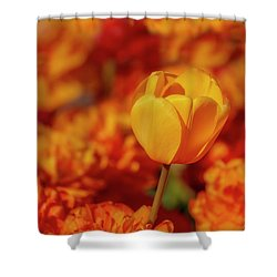 Shower Curtain featuring the photograph Tulip Standout by Susan Candelario