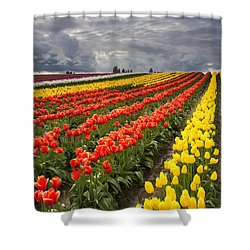 Tulip Storm Shower Curtain by Mike  Dawson