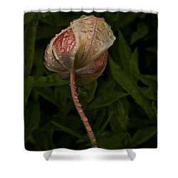 Tulip Tear Drops Shower Curtain by Richard Cummings