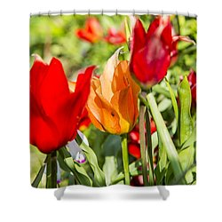 Shower Curtain featuring the photograph Tulip - The Orange One 02 by Arik Baltinester