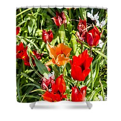 Shower Curtain featuring the photograph Tulip - The Orange One 03 by Arik Baltinester