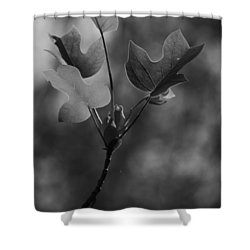 Tulip Tree Leaves In Spring Shower Curtain by Jane Ford