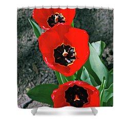 Shower Curtain featuring the photograph Tulip Trio by LeeAnn McLaneGoetz McLaneGoetzStudioLLCcom