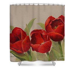 Shower Curtain featuring the drawing Tulip Trio by Phyllis Howard