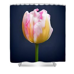 Shower Curtain featuring the photograph Tulip Triumph - 2 by Paul Gulliver