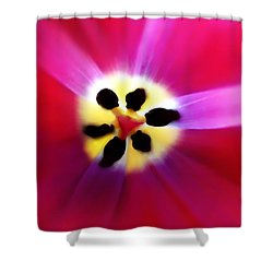 Tulip Vivid Floral Abstract Shower Curtain