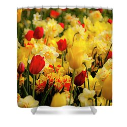 Tulips And Daffodils Shower Curtain by Tamyra Ayles