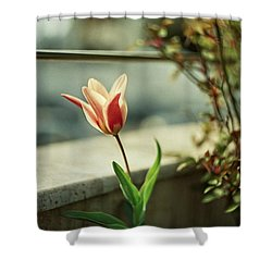 Tulips Are Amazing  Shower Curtain