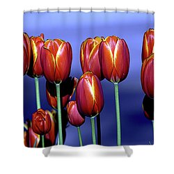 Tulips At Attention Shower Curtain