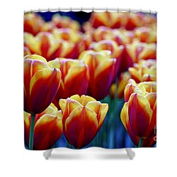 Tulips At Sunset Shower Curtain