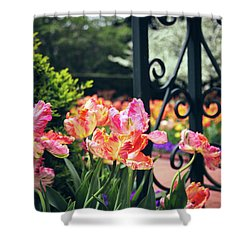 Tulips At The Garden Gate Shower Curtain by Jessica Jenney