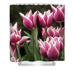 Tulips Bed  Shower Curtain