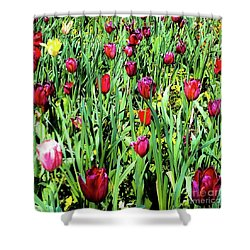 Tulips Blooming Shower Curtain