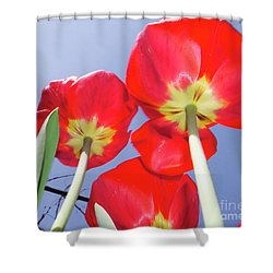 Shower Curtain featuring the photograph Tulips by Elvira Ladocki
