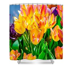 Shower Curtain featuring the photograph Tulips Enchanting 36 by Alexander Senin