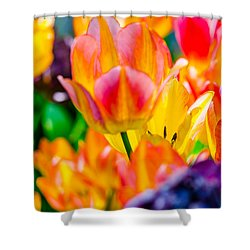 Shower Curtain featuring the photograph Tulips Enchanting 37 by Alexander Senin