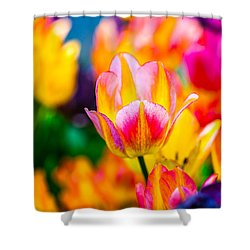 Shower Curtain featuring the photograph Tulips Enchanting 38 by Alexander Senin