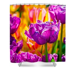 Shower Curtain featuring the photograph Tulips Enchanting 41 by Alexander Senin