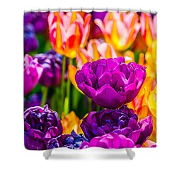 Shower Curtain featuring the photograph Tulips Enchanting 42 by Alexander Senin