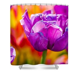 Shower Curtain featuring the photograph Tulips Enchanting 43 by Alexander Senin