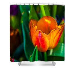 Shower Curtain featuring the photograph Tulips Enchanting 44 by Alexander Senin